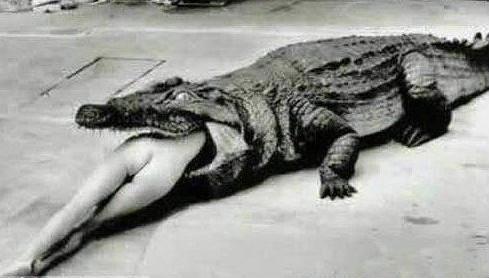 古代惊人酷刑 竟用动物处死美女