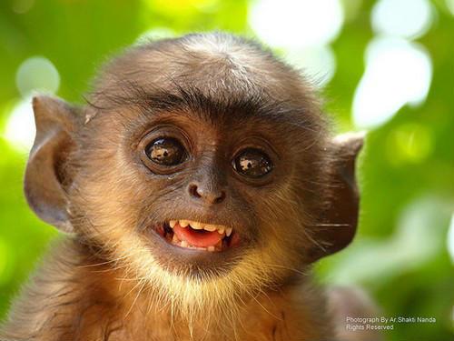 微笑:世界上最美的表情
