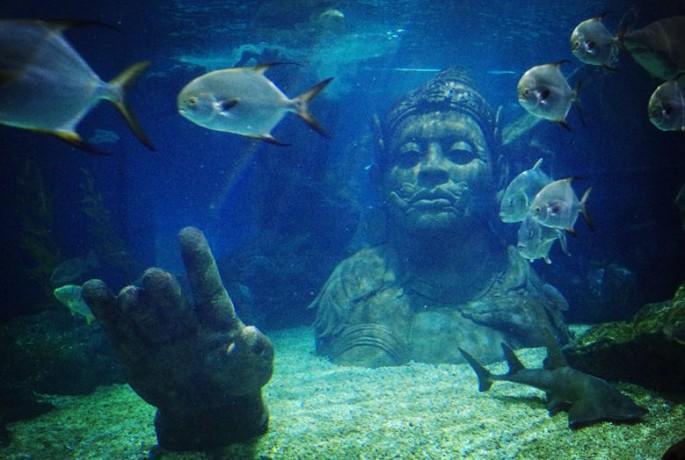 软体动物,节肢动物,棘皮动物和脊椎动物等不同类型的海洋生物,其中图片