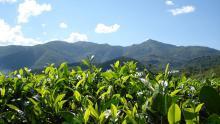 芒翁自然村的自然资源