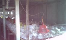 粟海集团生产环境