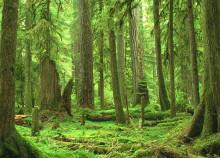 寒温带针叶林