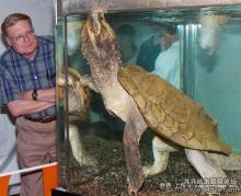 真鳄龟图册