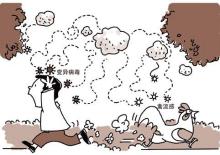 禽流感传播