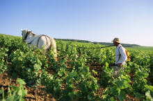 勃艮地葡萄园气候与风土