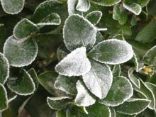 霜降與農作物