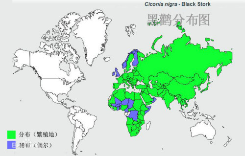 黑鹳分布图图片