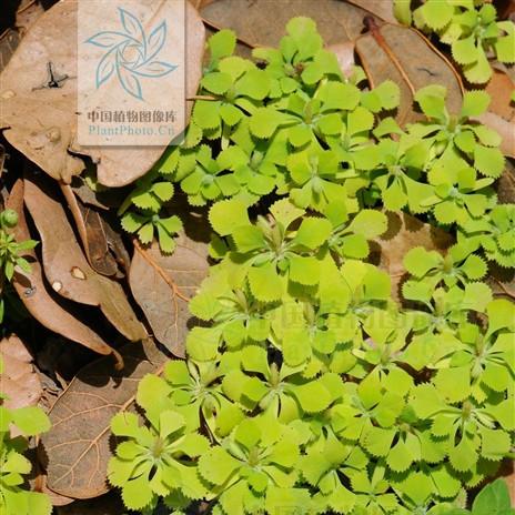 背景 壁纸 绿色 绿叶 树叶 植物 桌面 464_464图片