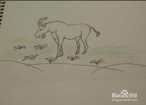"""可以给""""羊""""适当涂上一些颜色.简笔画""""羊""""就画好了.图片"""