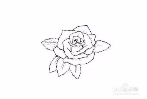 用photoshop给简笔画玫瑰花涂色步骤图片