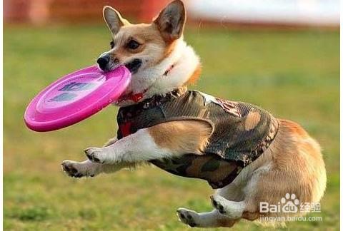 日狗的经验_怎么才能训练好狗狗_百度 经验