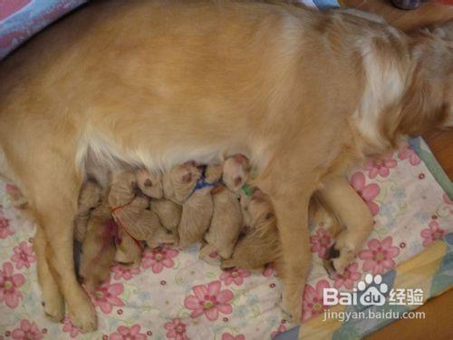 刚出生的小狗怎么养