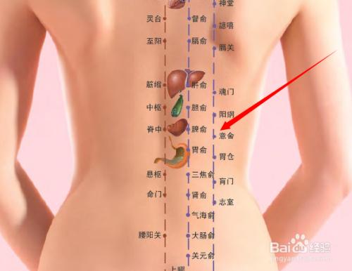 背部膀胱经图片_