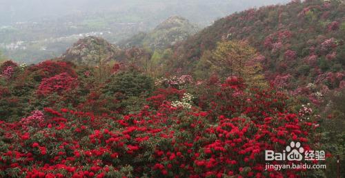 贵州旅游必去景点推荐大全百里攻略旅游杜鹃山东长岛旅游景点必玩的攻略图片