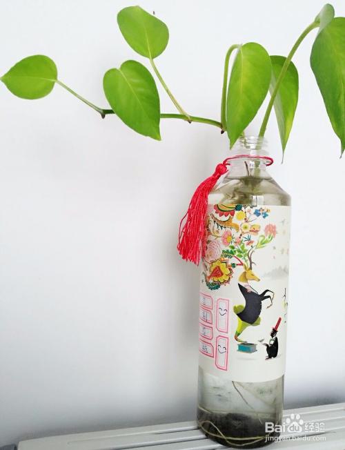 这是小编用废弃的矿泉水瓶做成的花瓶图片