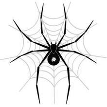 bt蜘蛛 下载