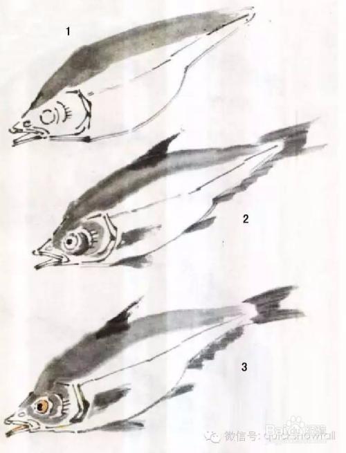 国画鱼的画法教程图片