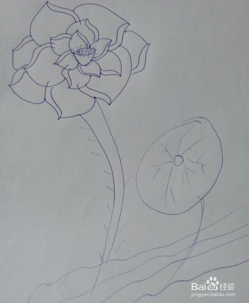 工笔荷花白描步骤 工笔荷花鲤鱼白描图 工笔荷花白描 荷花工笔画白描