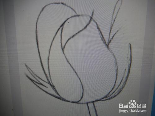 如何用铅笔画一朵玫瑰花