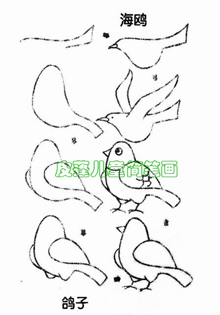 鸽子的简笔画课件 鸽子简笔画怎么画 鸽子的简笔画课件原图图片