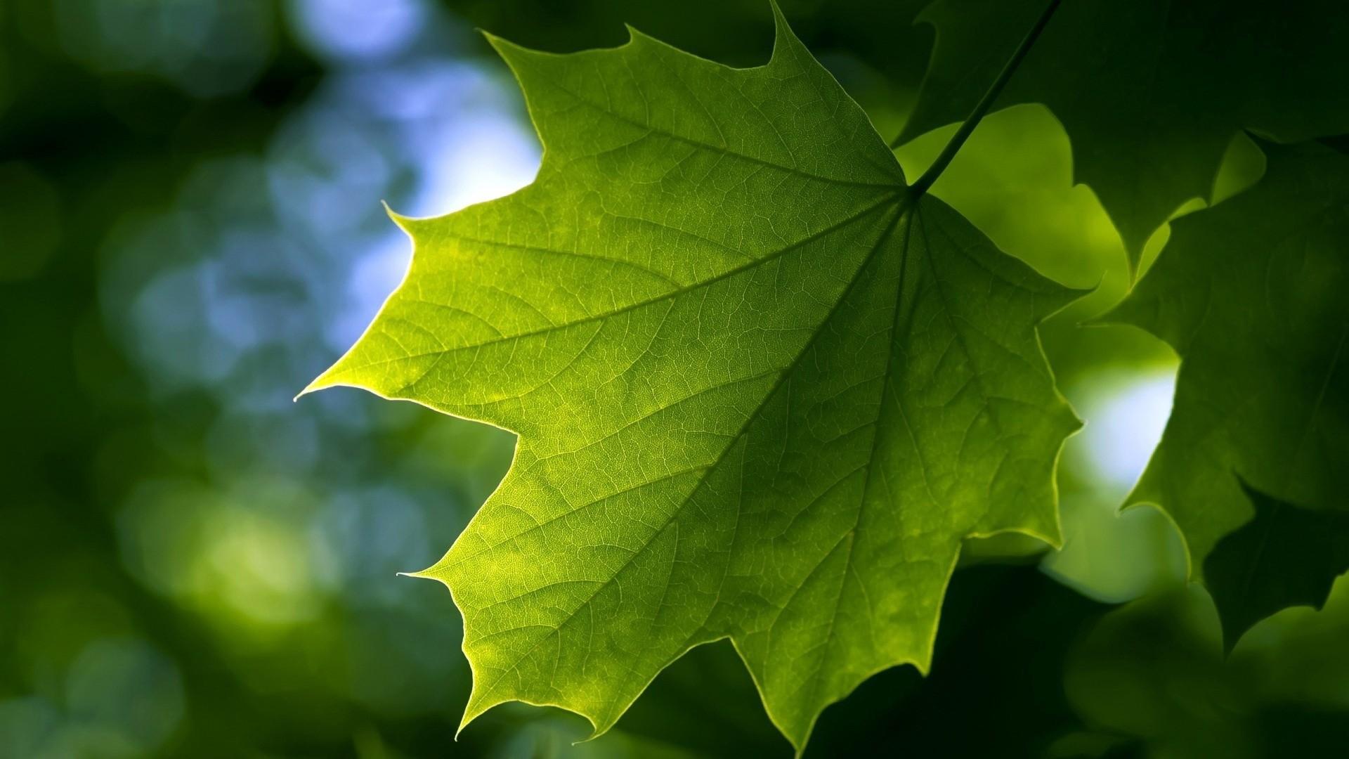 绿色树叶特写电脑壁纸图片