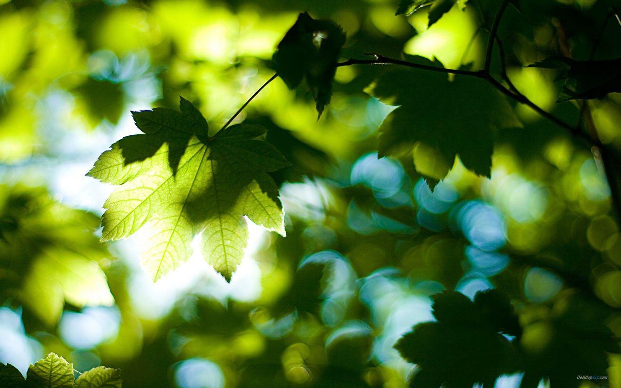 唯美自然风光小清新绿色树叶护眼桌面壁纸第一辑,是美桌网www图片