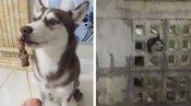 有才的网友:愚蠢的人类,本狗会说点汉语怎么了?