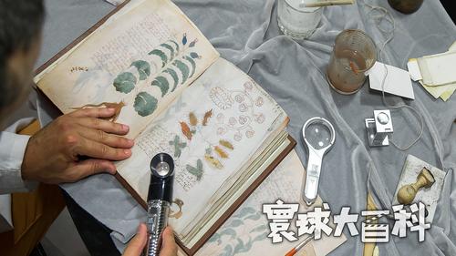 世纪谜团!这是一本世界上最神秘的手稿,至今无人能破译【寰球大百科335】