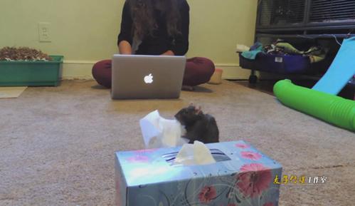 超和谐!美少女与2只老鼠的生活 网友全看呆了