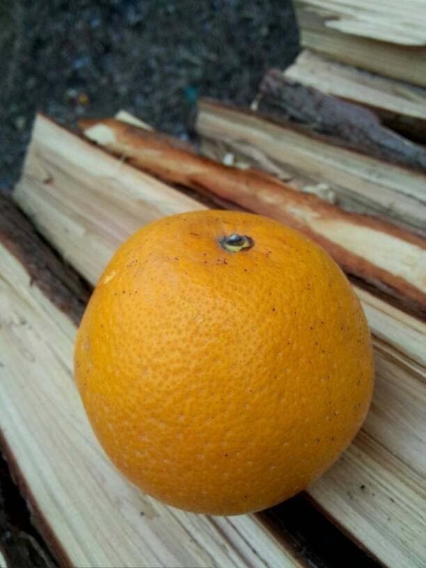 橘优花迅雷种子合集
