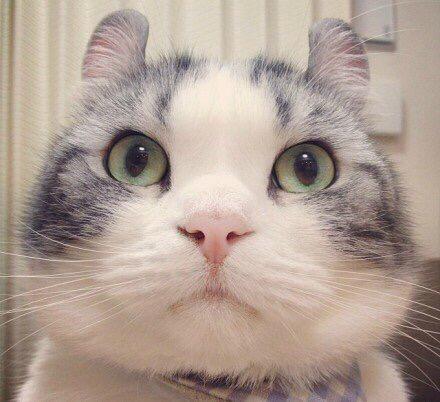 甜甜私房猫壁纸