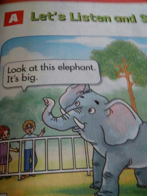 四年级动物单词图片