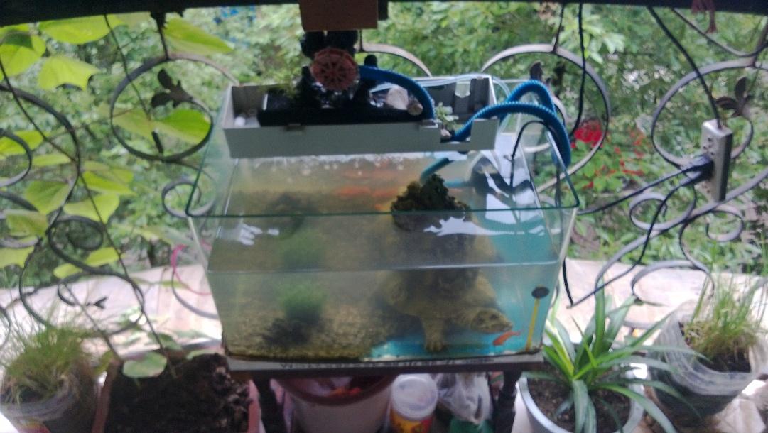 有上滤的,鱼缸还是不干净?图片