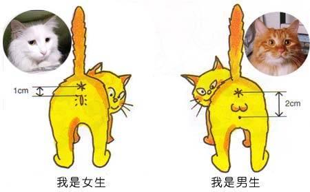 公母猫怎么区分