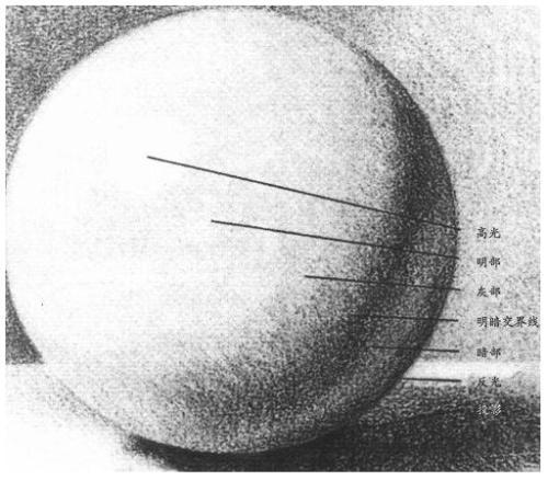 素描球体 暗面 灰面 亮面 反光面 高光点各在哪儿图片