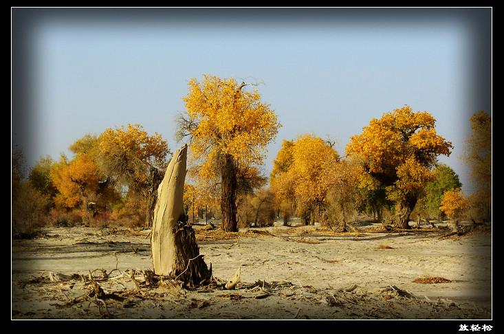 新疆轮台胡杨林公园
