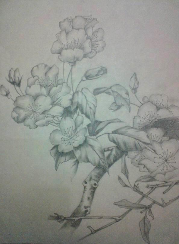 花卉素描简单铅笔画