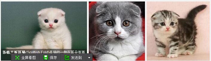 全世界最可爱的猫