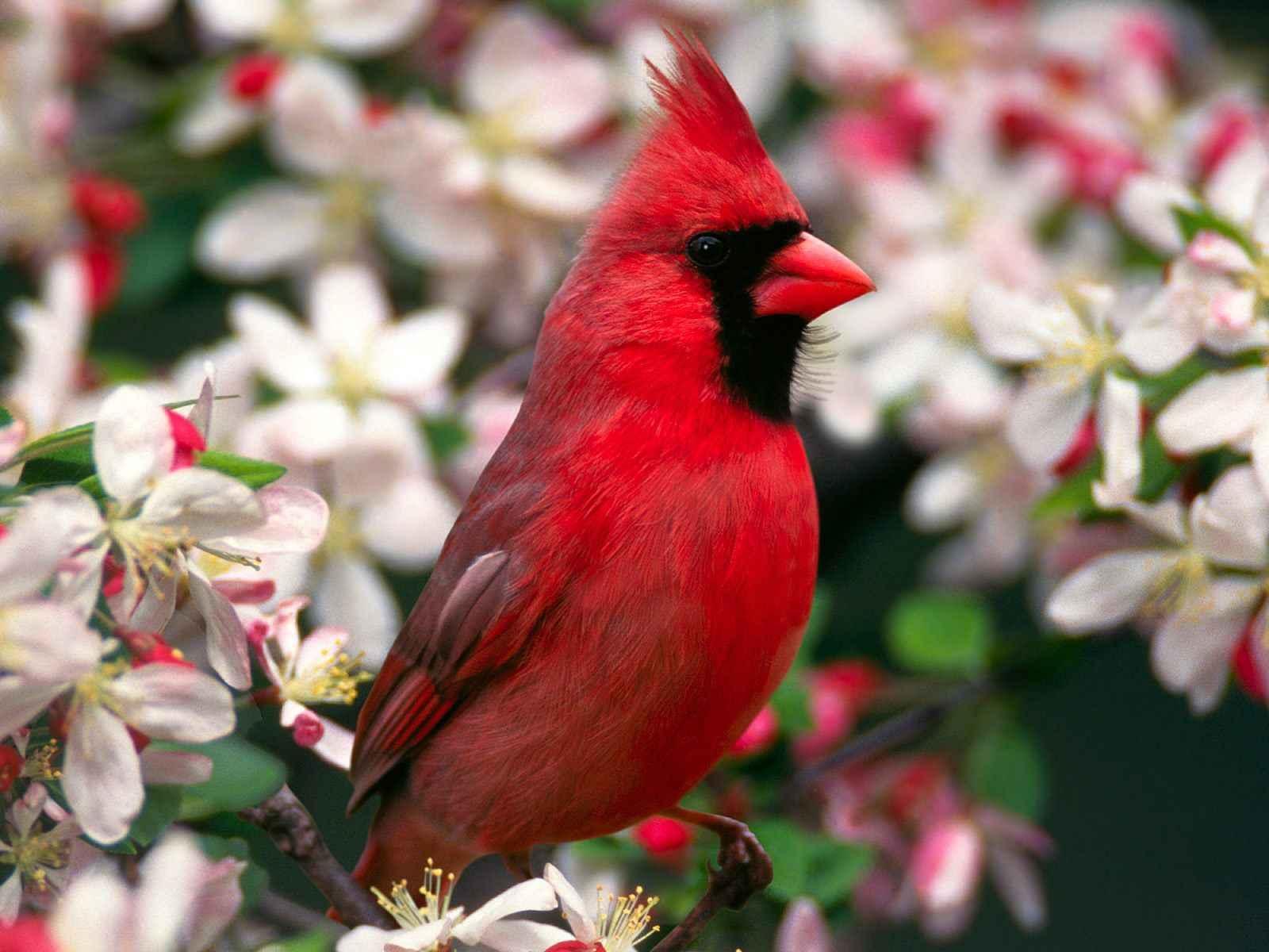 一般养什么鸟叫声好听~好养的,总喜欢叫的~谢谢