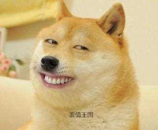 搞笑的柴犬