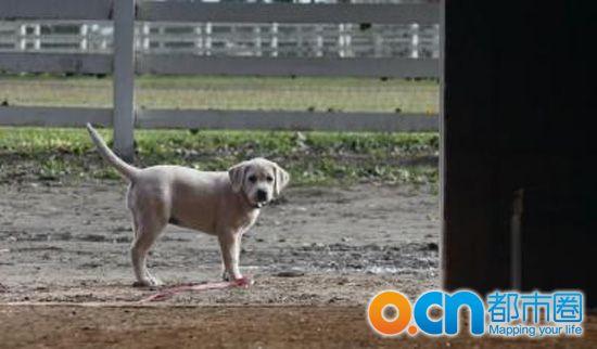 告犬马情_百威啤酒广告犬马情深 那条狗是什么狗