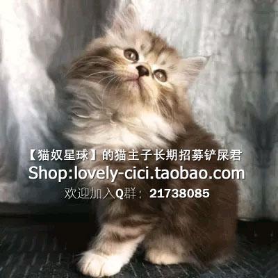 猫的种类及价格