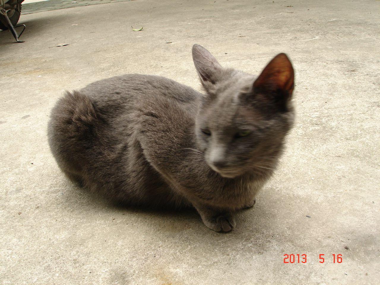 猫品种大全及图片 猫的品种名字及图片 兰花品种名称及图片