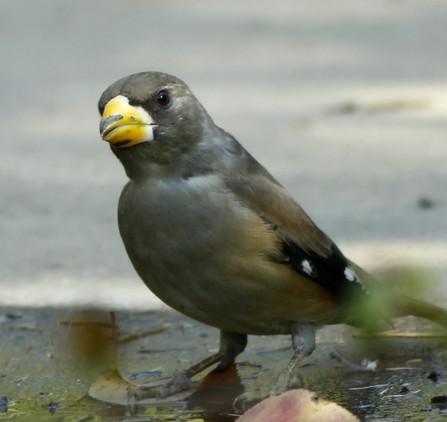 这是一只公鸟,还是一只母鸟?