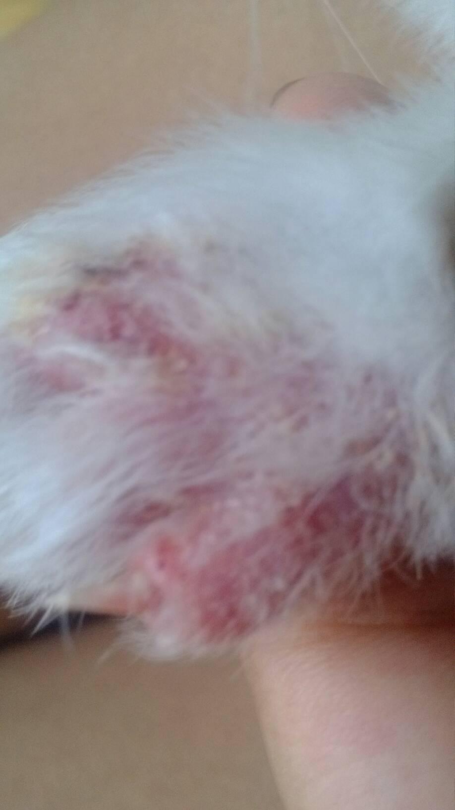 宝宝螨虫叮咬症状 螨虫咬的症状 螨虫叮咬的症状图 螨虫咬症状图 螨虫图片