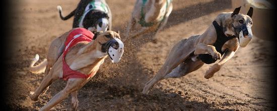 跑步最快的狗