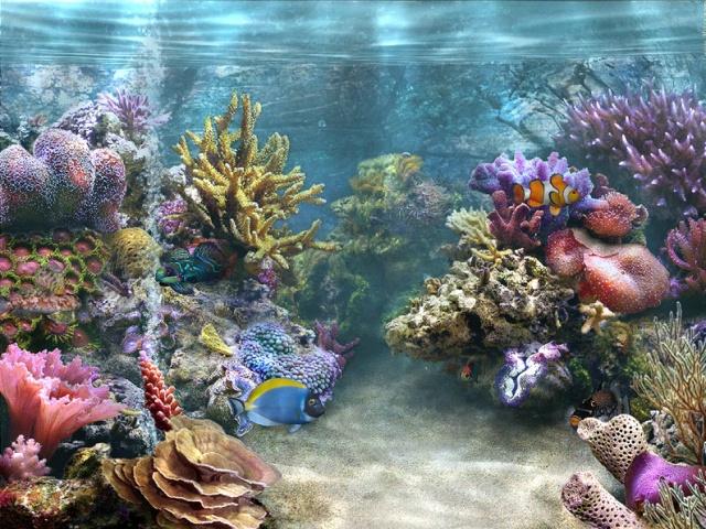 苏州海底世界图片