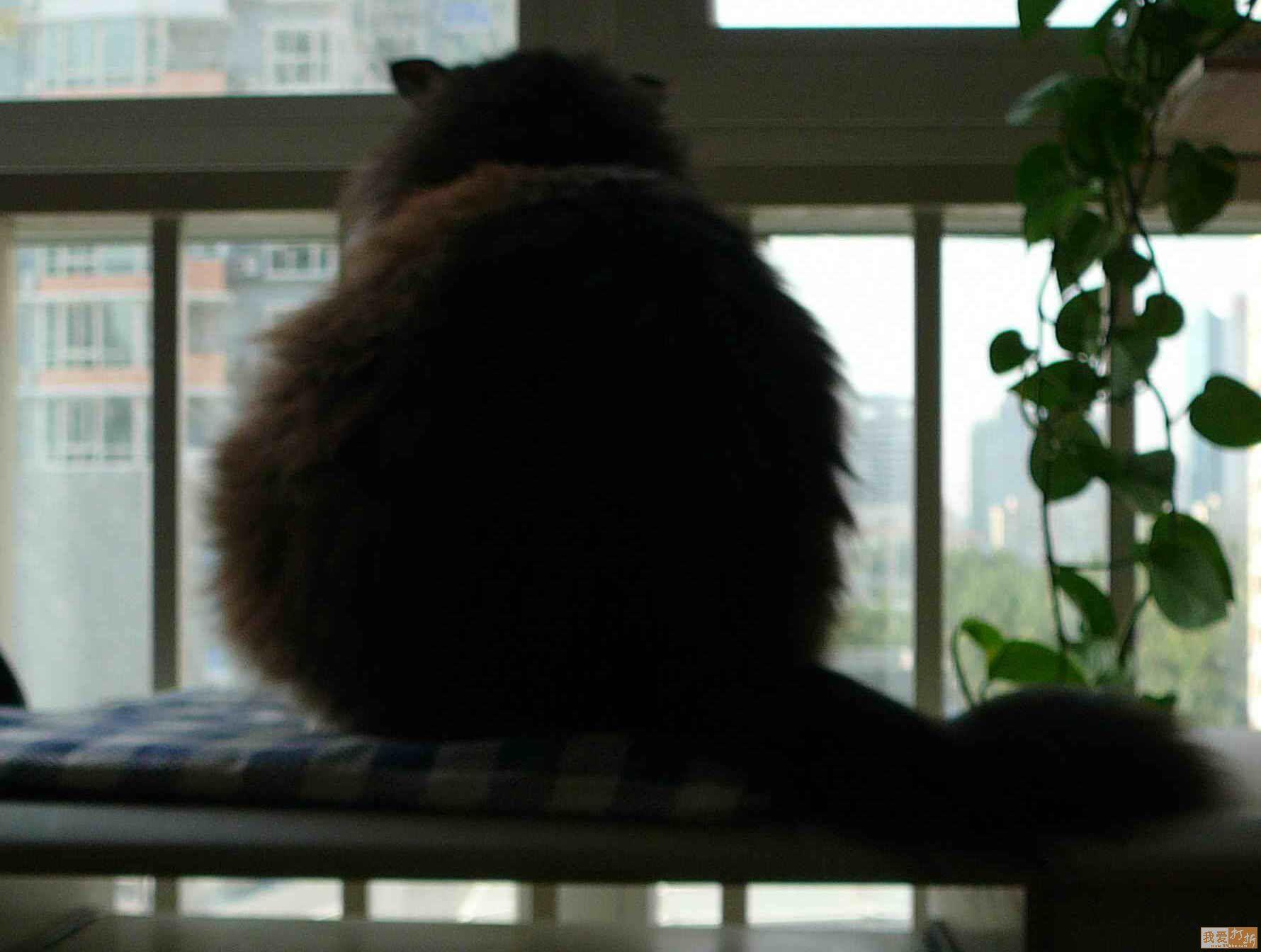一只猫在窗户的照片