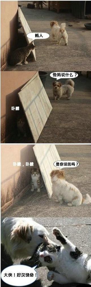 猫与狗的幽默对话