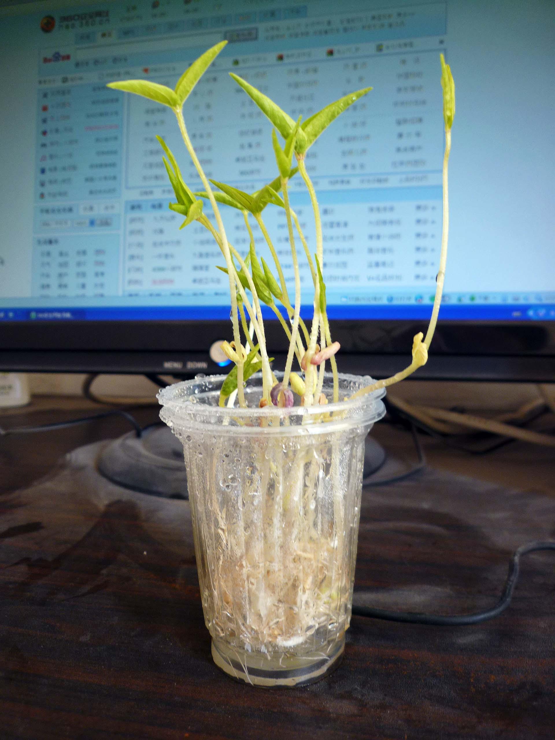什么种子好发芽